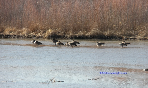 Geese on the Rio