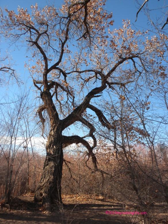 "The gnarly trees said, ""Hello!"""
