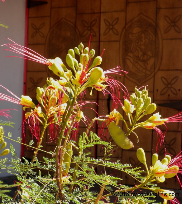 Another view of Desert Bird of Paradise against the backdrop of this beautiful old Spanish-style door.