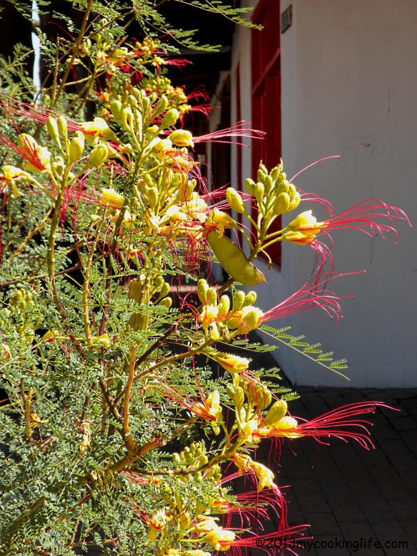 This Desert Bird of Paradise caught my eye on this very sunny morning in Old Town.