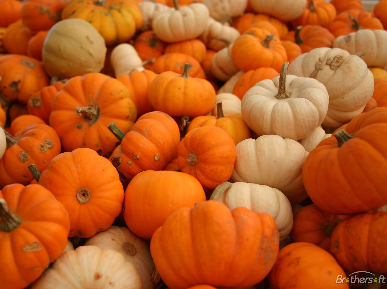free_plenty_of_pumpkins_wallpaper-426951-1286854509